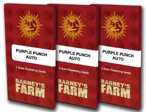 semi purple punch auto